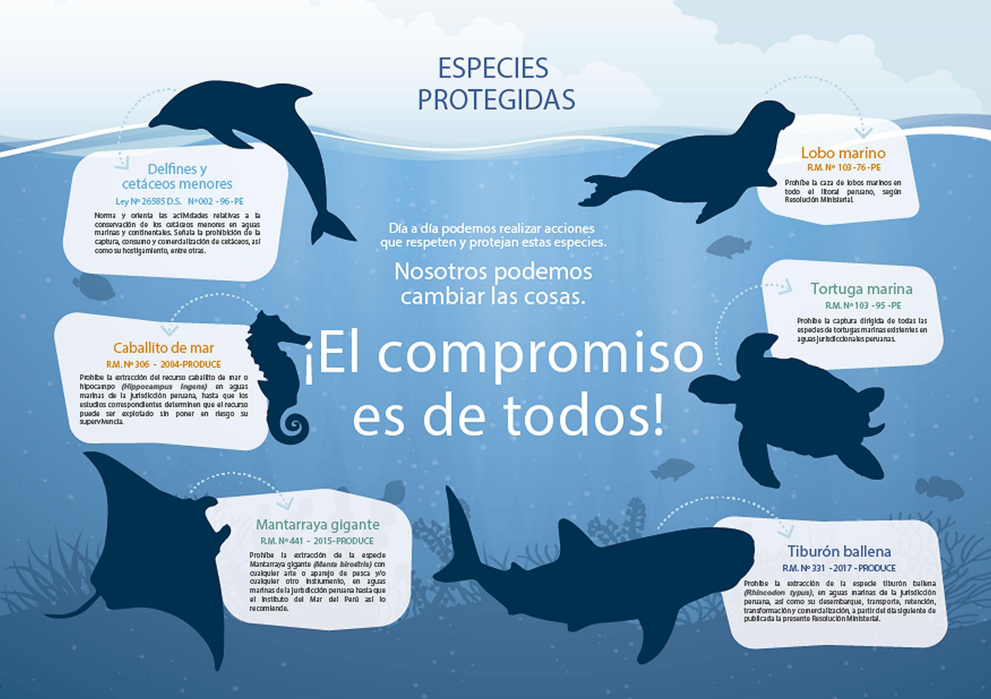 TURISMO EN ANCON | ESPECIES PROTEGIDAS